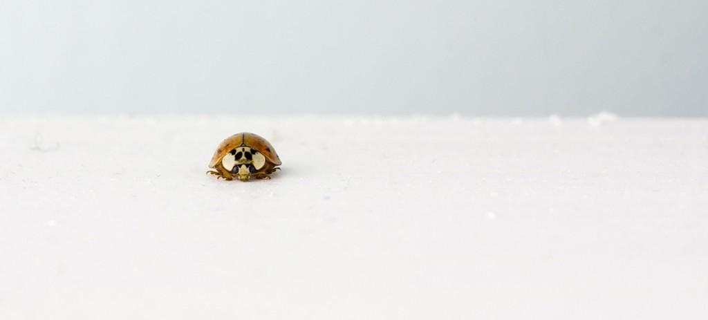animal-beetle-insect-329
